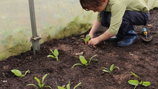 Small-boy-planting-seedlings