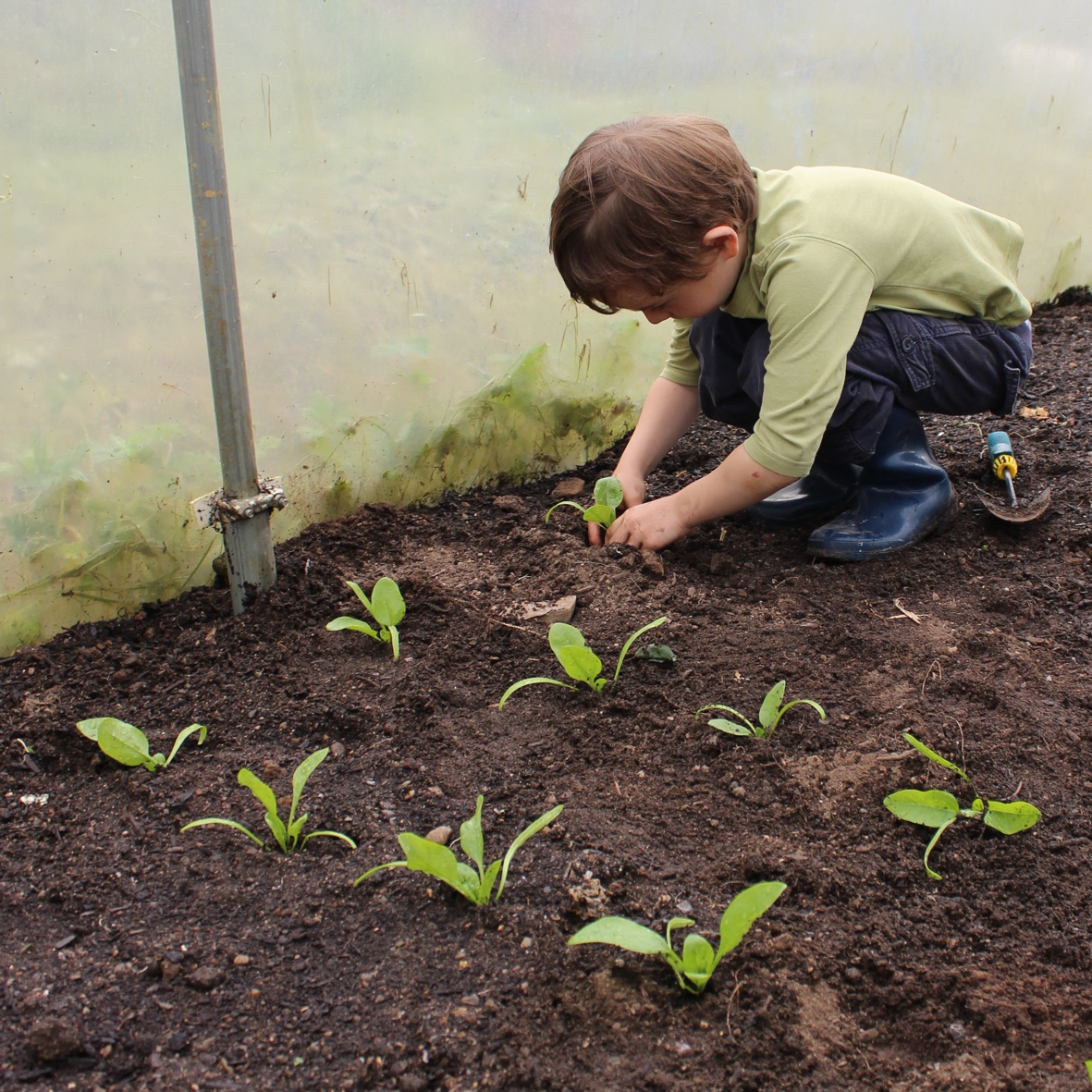 Small-boy-planting-seedlings