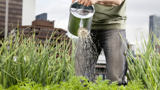 man in jeans watering plants